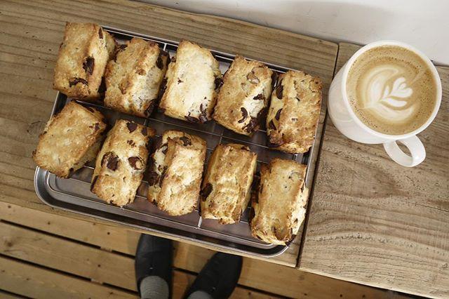 柚子と薩摩芋の抹茶パウンドは本日売り切れましたが、スコーンが焼きたてでできてます😶️午後の休憩にコーヒーとどうですか?🤗